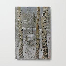 Winter Aspens Metal Print