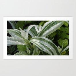 Botanic Garden Greenery Art Print