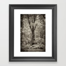 Old Oak Dark  Framed Art Print