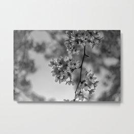 B&W Cherry Blossoms Metal Print