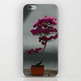 Trees #6 iPhone Skin