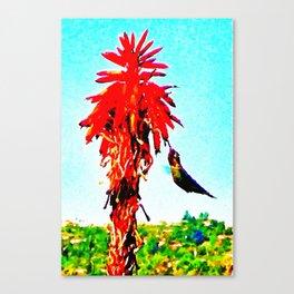Stickybeaking Hummingbird Canvas Print