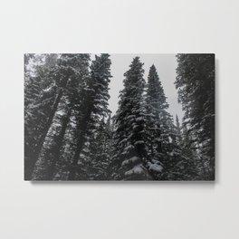 Winter Pine Trees Metal Print
