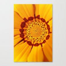 Orange Sun - gazania flower 3509 Canvas Print