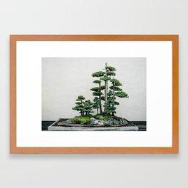 Juniper Bonsai Forest Framed Art Print