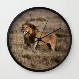 African Lion in Kenya Wall Clock
