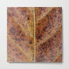 Dry old leaf Metal Print