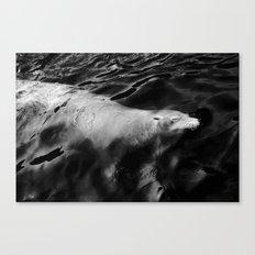 Waterglider Canvas Print