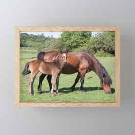 Wild Mustang Mare and Foal Framed Mini Art Print