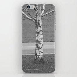 Birch Tree 2 iPhone Skin