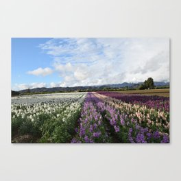 Santa Paula Briggs Road Flowers after the Rain Canvas Print
