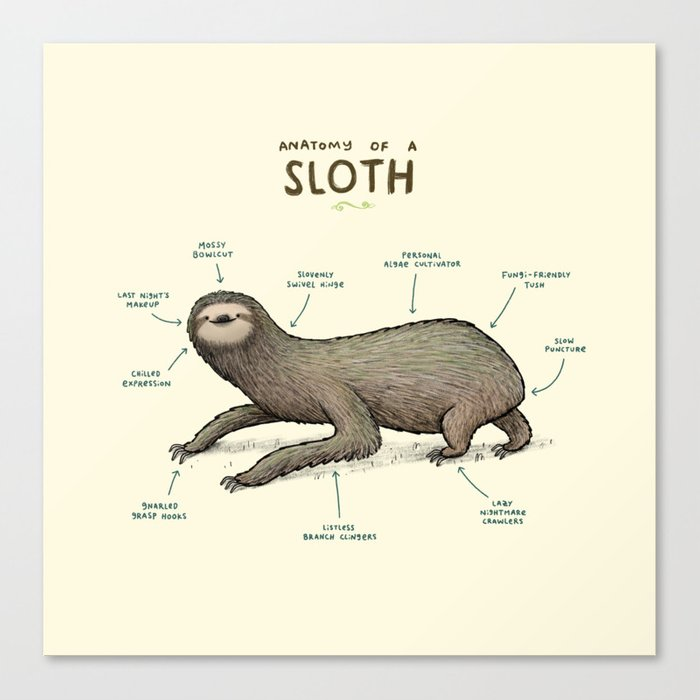 Anatomy of a Sloth Canvas Print