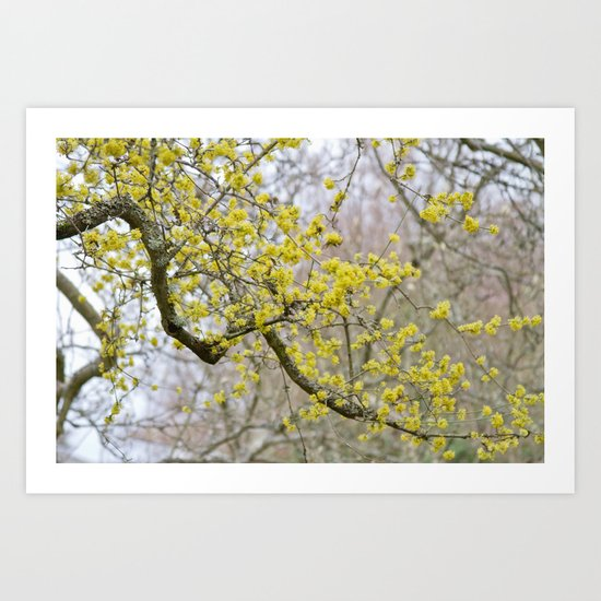 Springtime Nears Art Print
