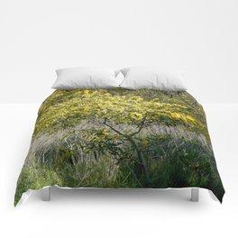 Flowering Acacia Tree Comforters