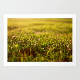Clover and the Golden Hour Art Print