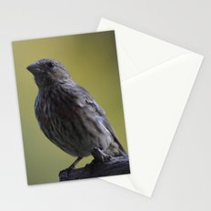 An Immature House Finch Stationery Cards