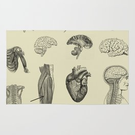 Vintage Anatomy Print Rug
