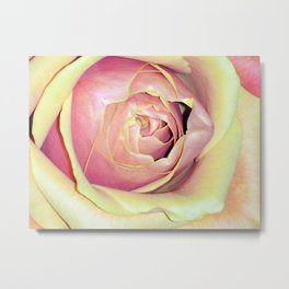 Rose of Another Color Metal Print