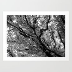 Under the Elm Art Print
