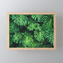 Monstera leaf jungle pattern - Philodendron plant leaves background Framed Mini Art Print