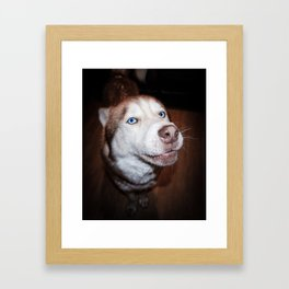 Husky Framed Art Print