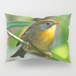 Paparazzi-Seekin' Pekin Robin Pillow Sham