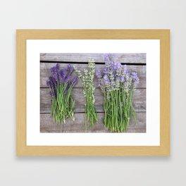 Shades of Lavender Framed Art Print