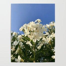 Oleanders Poster