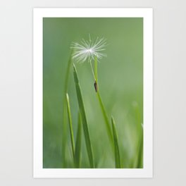 dandy seed Art Print