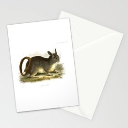 Lagotis pallipes,' chinchilla, drawn and engraved by Edward Lear. Stationery Cards