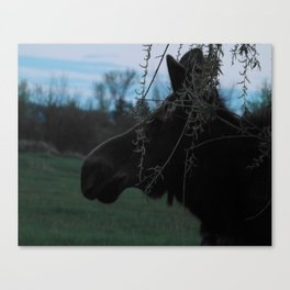 Missy Evening profile Canvas Print