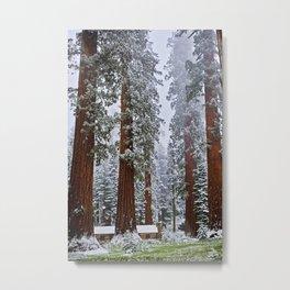 Sequoias in snowfall Metal Print