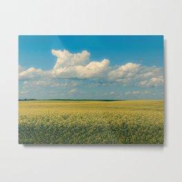 Prairie Summer; big blue skies and golden canola fields  Metal Print