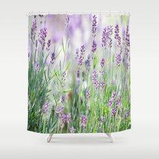 Lavender in summer garden Shower Curtain