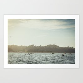 Flying Seagulls Art Print