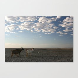 PEACEFUL GOATS Canvas Print