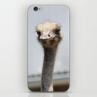 ostrich iPhone & iPod Skins featuring Ostrich :) by IowaShots