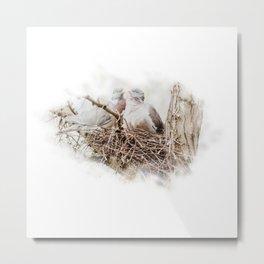 Pigeons cuddling Metal Print