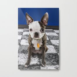Murphy June- Boston Terrier Metal Print