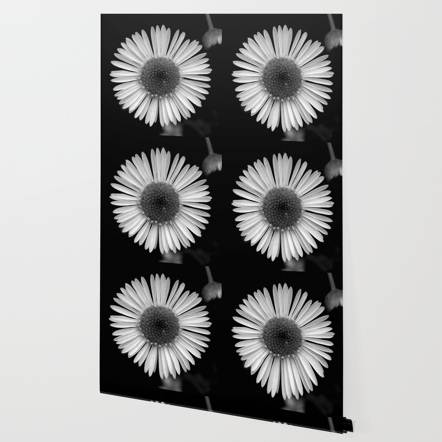 Black White Daisies Flower Daisy Wallpaper By Lifeisbeautiful