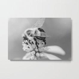 Black and White Bee Metal Print