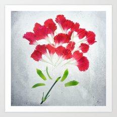 Red Carnation Botanical Blueprints Art Print