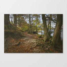 Exposed tree roots on Ullswater near Pooley Bridge. Lake District, UK. Canvas Print