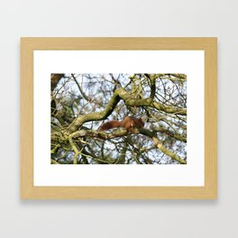 Red Squirrel Photograph Framed Art Print