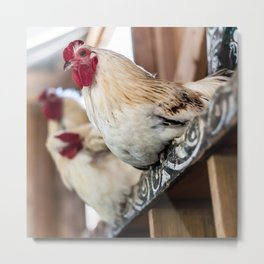 Roosting Hen Metal Print
