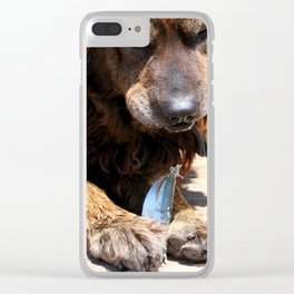 Dog Eating Fish Clear iPhone Case