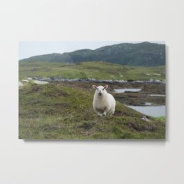The prettiest sheep Metal Print