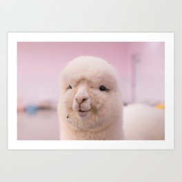 WHITE SHEEP IN CLOSE UP PHOTOGRAPHY Art Print