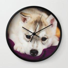 husky puppy. Wall Clock