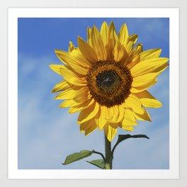 Sunflower flower Art Print